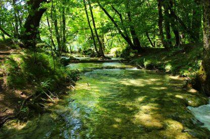 Bosque de ribera